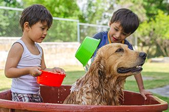 A dogwash can help raise money for your church while providing a valuable service for your congregants.