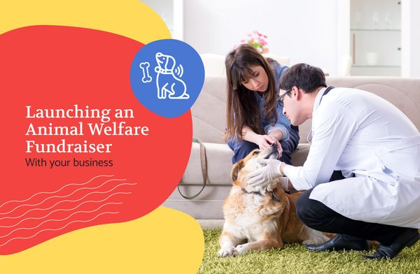 Launching an Animal Welfare Fundraiser with Your Business