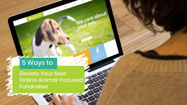 5 Ways to Elevate Your Next Online Animal-Focused Fundraiser